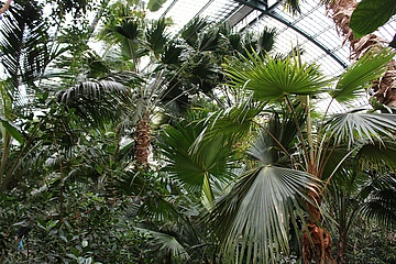 Palmengarten feiert 150 Jahre Palmenhaus