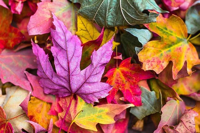 Frankfurter Herbstlaune