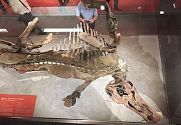 Edmonds Urzeitreich – Eine Dinograbung in Frankfurt