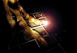 Nachts im Senckenberg Museum - Taschenlampenführung