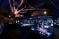 The Senckenberg Museum of Nature dives into the deep sea