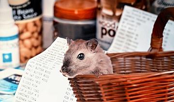 Corona-Krise –Allgemeinverfügung der Stadt Frankfurt am Main gegen Hamsterkäufe