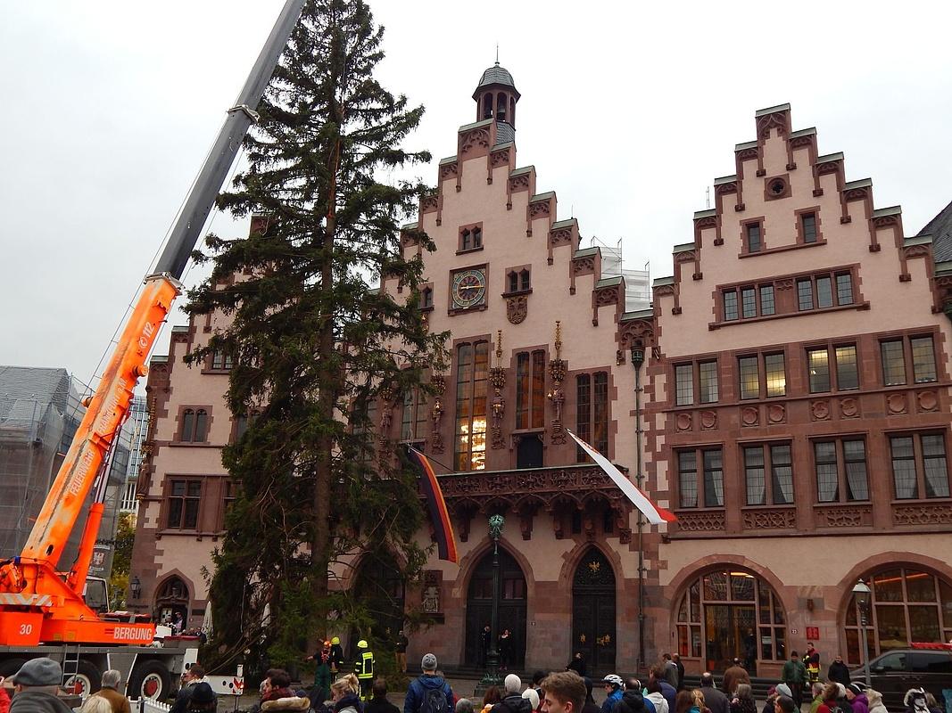 Weihnachtsbaum Frankfurt.Oh Du Schöne Fichte Muss Der Weihnachtsbaum Schön Sein