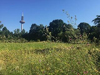 Botanischer Garten lädt zum Tag der offenen Tür am 7. September