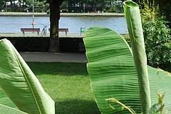 See oder Freibad? Sommerlust in Frankfurt