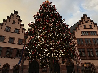 Frankfurt Christmas tree lights up - Bertl shines on the Römerberg