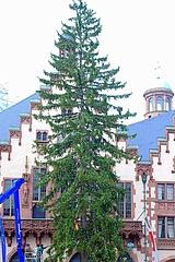 Oh du schöne Fichte – Muss der Weihnachtsbaum schön sein?