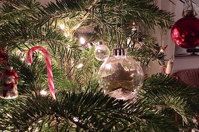 Oh, Tannenbaum: So läuft die Weihnachtsbaumentsorgung 2019