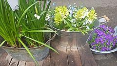 Fünf gute Gründe, um genau jetzt Blumen zu verschenken