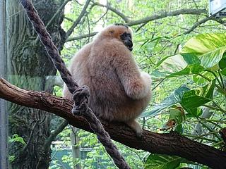 Neues Traumpaar im Zoo