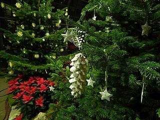Wieder feste Sammeltermine für Weihnachtsbäume