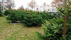 Muss es immer Weihnachtsbaum sein?