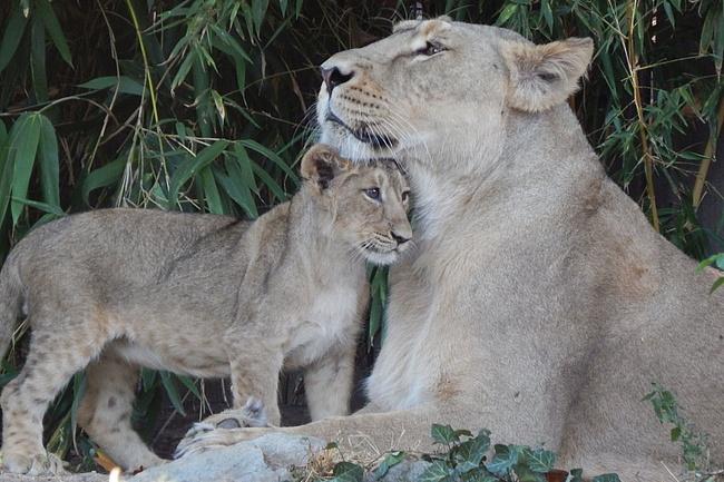 Der Zoo zieht Bilanz für 2018