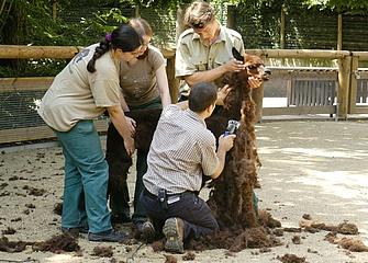 Die Zootage bieten einen Blick hinter die Kulissen