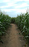 Afrikatag im Maislabyrinth
