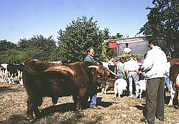 Berger Markt mit Stadtschreiberfest