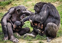 Die Physiologie des Menschen und anderer Primaten