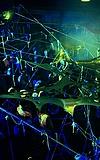 HGich.T Acid-Aftershow Goa-Party