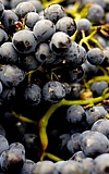 Hoffest im Weingut Lohmühle