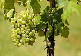 Mainzer Weintage