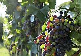 Neu-Isenburger Weinfest