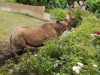 Internationaler Tag des Nashorns im Zoo