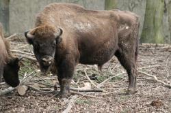 Tier- und Pflanzenpark Fasanerie in Wiesbaden Gonzo28
