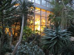 The Palm Garden - Frankfurt's Green Oasis