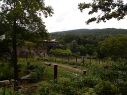 Der Opel Zoo – Eines der beliebtesten Ausflugsziele der Hessen