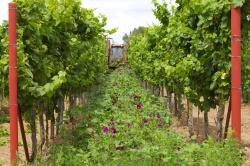 Weingut Butz – Innovation trifft auf Tradition ... Weingut Butz
