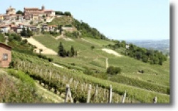 Best of Piemont - wine seminar with Fabian Lange