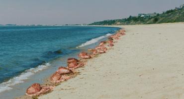 The Beach House - Am Strand hört dich niemand schreien!