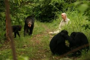Jane`s Journey – Die Lebensreise der Jane Goodall - DVD
