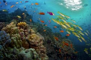 Das Great Barrier Reef – DVD