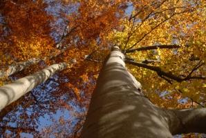 Das grüne Wunder – Unser Wald