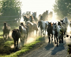 Buck – Der wahre Pferdeflüsterer – DVD