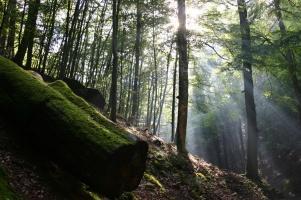 Das grüne Wunder – Unser Wald – DVD