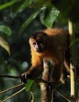 Amazonia 3D