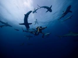 Jacques – Entdecker der Ozeane