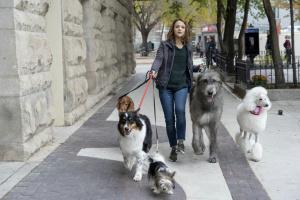 Bailey - A dog returns