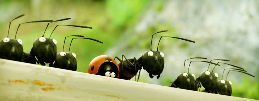 The tiny ones - Operation sugar bowl