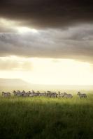 Africa - The Magic Kingdom